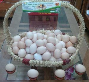 Trứng gà hữu cơ
