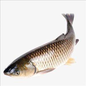 Cá trắm