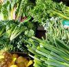 rau sạch không phun thuốc, an toàn thực phẩm